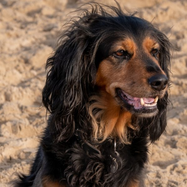 Rosa-hond-collega-afscheid